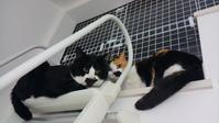 いつも一緒 - ヨーキー アイくんのおうち -保護猫里親探し活動中-