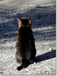 【ね】ネコの背中:ねこのせなか - ネコニ☆マタタビ