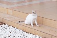 kucing putih - 日々是好写
