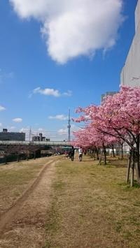 河津桜 - Harvest *Wreath