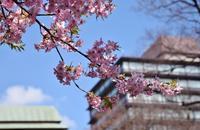 街散歩「椿山荘」 - 花の仕事と。。日々の暮らし。。