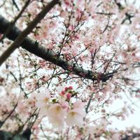 3月お休み - 観音寺市 美容室 accha