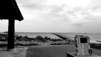 monochrome @Kuroshima - しっかり立って、希望の木