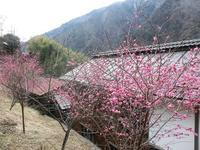 早春の赤沢宿2017 - 風路のこぶちさわ日記