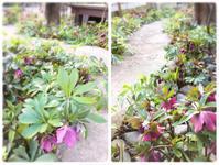 2月の1dayレッスン③ - driedflower arrangement ✦︎ botanical accessory ✦︎ yukonanai ✦︎ gland*
