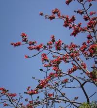 パトジャル(落葉の季節)、そして夏へと - Blue Lotus