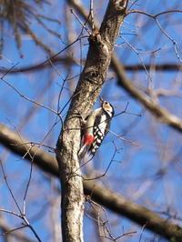 井頭公園の野鳥 - コーヒー党の野鳥と自然 パート2