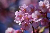 春爛漫、新宿御苑 - Buono Buono!