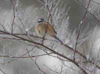 少しだけ寒い所 - 鳥撮りに行こう!(ついでにあれもこれも)