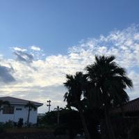 シュノーケル&カヌーツアー♪2016/11/4(金) - しっかり立って、希望の木