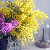 FELICE フラワーレッスンスケジュール 3月*Flower Lesson Schedule Mar. '17 - 「想いを伝える幸せの花」by FELICE Flower Design Studio & Regalo