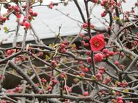 鶴見区、馬場・獅子ヶ谷周辺の旅 ~その2~ - 神奈川徒歩々旅
