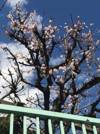 やはり青空に花が映える - Pushpin Diary(L.J.Style Book)
