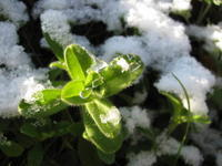 雪のむら消え(fading snow patches) - ももさへづり*やまと編*cent chants d'une chouette (Yamato*Japon)