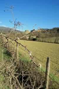 絶壁の里にも春、トスカーナ アルノ渓谷 - イタリア写真草子 Fotoblog da Perugia