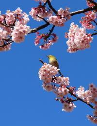 春を探して~♪お写んぽ散策桜ジロー新宿御苑3 - Let's Enjoy Everyday!