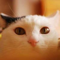 僕の愛猫。 - 花色~あなたの好きなお花屋さんになりたい~
