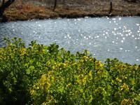 『早春の木曽川水園で・・・・・』 - 自然風の自然風だより