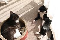 ひだまりと猫 - 亜麻仁