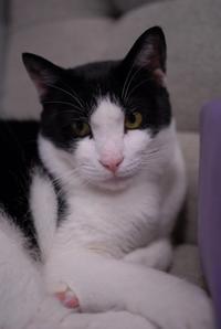 チョッパースペシャルでナツ - Black Cat Moan