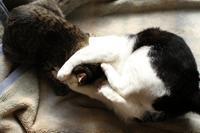 真昼の決闘 - Black Cat Moan