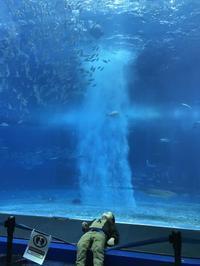 美ら海水族館 - アクエリエル京都
