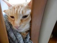 すすむボケボケ~ - 愛犬家の猫日記
