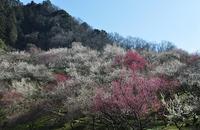 景信山・高尾梅郷巡り - 歩のち登、ときどき走。