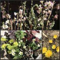 春の花 - 森の扉