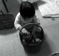 カゴ屋のアオちゃん - あけびのあ