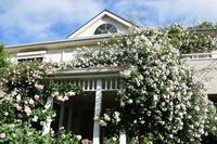 産経学園新百合ヶ丘教室「素敵にローズライフ」のご案内 - 元木はるみのバラとハーブのある暮らし・Salon de Roses