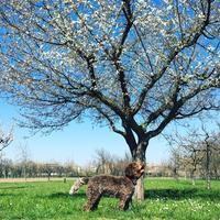 Primavera✿ イタリア、モデナの春花 - ITALIA Happy Life イタリア ハッピー ライフ  -Le ricette di Rie-