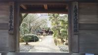 川越散歩3月8日中院の花 - 川越散歩