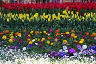 早春のフラワーパークⅠ - 季節の風を追いかけて