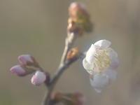 今年も開花が始まりました - 休日登山日記
