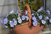 小さな春がやってきた - HANA 花♪菜園日記