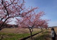 今年の花見始め - じじ & ばば の Photo blog