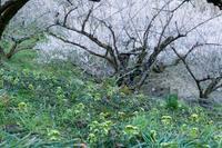 奈良の春はすぐそこに - toshi の ならはまほろば