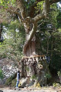 長島神社のクスノキ - みちはた写真館フォトギャラリー