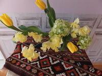 春の黄色いお花とキリムたち - じゅうたんや あんからあん (絨毯屋 庵殻庵)