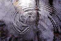 水面のアーティスト・・・ミズスマシの描くグルグルがカワイイ♪ - 『私のデジタル写真眼』