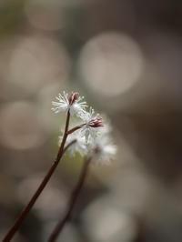 ひっさびさの地元野草園3月12日 - 風まかせ、カメラまかせ