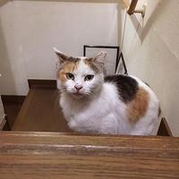 捕獲失敗! - ぶつぶつ独り言2(うちの猫ら2018)