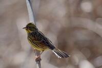 2月に出会った鳥さんたち - Buono Buono!