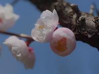 古木には優しい花が! - 休日登山日記
