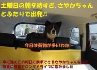 さやかちゃんお嫁入りのご報告♪(その1) - もももの部屋(怖がりで攻撃性の高い秋田犬のタイガ、老犬雑種のベスの共同生活&保護活動の記録です・・・時々お空のモカも登場!)