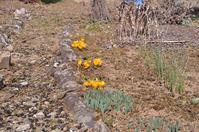 わが家の庭の春 - 栗駒山の里だより