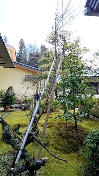 おじいさん梅の木 - 金沢犀川温泉 川端の湯宿「滝亭」BLOG
