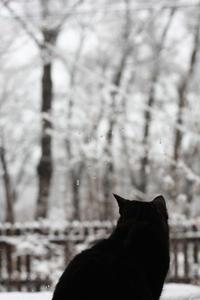 春の雪 - 小さな森のキキとサラ