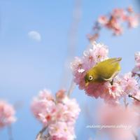 咲くや木の花 - andante...